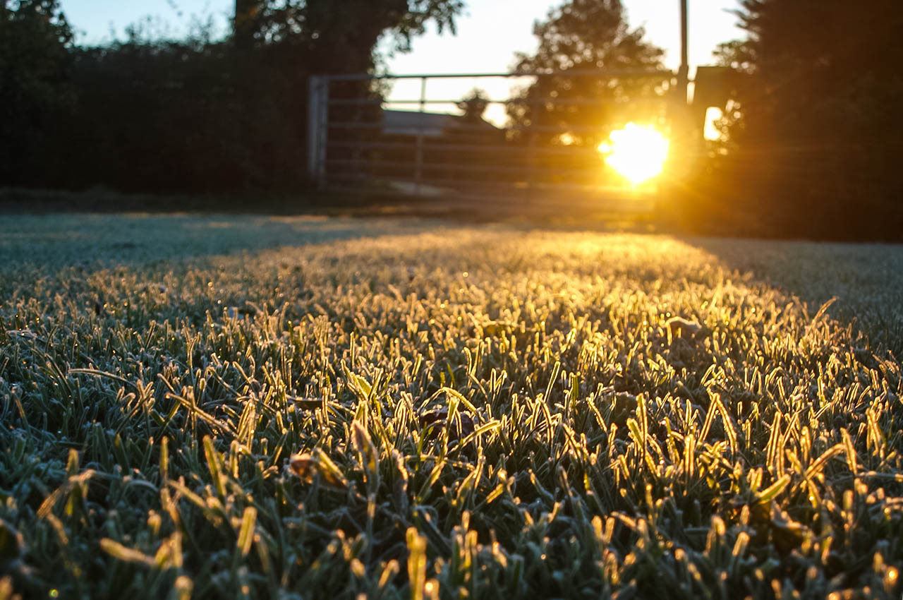 Frosty sunrise